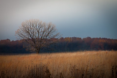 Stormy Afternoon (Kevin Rodde) Tags: storm tree field grass canon day 500d shoefactoryroadwoods t1i kevinrodde cookconunty kevinroddephoto