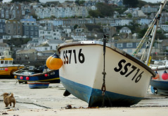 Dogs day out (farwest56) Tags: uk england dog colour building beach boats sand cornwall harbour sony shoreline float seashore stives a350