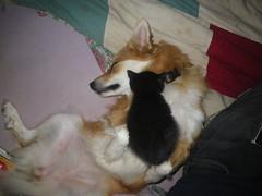 Gaela as kitty bed (LisaNH) Tags: