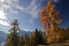 Larch @ fall, Graubünden Swiss Alps. (Richard Verroen) Tags: autumn sky snow mountains alps tree fall clouds forest landscape switzerland swiss sneeuw herbst herfst wolken summit bergen alpen larch bos landschap gebirge zwitserland graubünden lariks graubunden zwitserse bergtop verroen richardverroen
