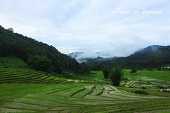 PhamonVillage-DoiInthanon-ChaengMai-Trip_By-P r i m t a a_E10886166-021