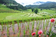 PhamonVillage-DoiInthanon-ChiangMai-Trip_By-P r i m t a a_E10886166-001