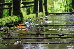 PhamonVillage-DoiInthanon-ChiangMai-Trip_By-P r i m t a a_E10886166-049