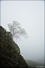 Equilibrio (P.H.Alonso) Tags: asturias niebla picosdeeuropa ordiales vegarredonda prpnpe5
