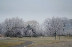 Lovely frosty morning... (Rekha Prasad) Tags: winter canada frost frostymorning kariyapark frostyday mississaiga ilovedthisday