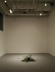 Untitled     Flower, Pot, Mixed media.     Installation, Video.     Size available