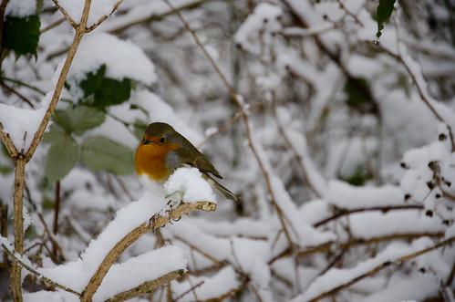 Winter bird 3 ©  Still ePsiLoN