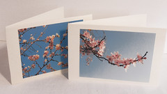 pink cherry blossom   sakura (the incredible how (intermitten.t)) Tags: pink blue cherry blossom sakura etsy 11799