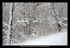 La Fort Enchante... The Enchanted Forest (Supersyl08) Tags: snow snowstorm neige temptedeneige