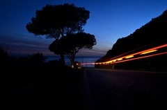 Maritime Pines (Paulo N. Silva) Tags: road sea car pine night