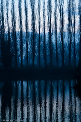 |||| (Francesco | Ceron) Tags: blue trees winter water vertical evening efs1755mmf28isusm francescoceronphoto
