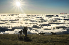 Esto es vida (Jabi Artaraz) Tags: jabiartaraz jartaraz zb euskoflickr yeguas behorrak potroak amanecer gorbeia gorbea contraluz sunset sunrise