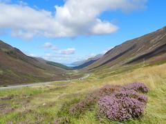 Loch Maree Viewpoint, Highlands of Scotland, August 2016 (allanmaciver) Tags: heather purple bloom viewpoint glen maree loch road twist stretch away weather august warm sunshine high car park allanmaciver highlands