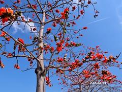 DAO-80185 (Chen Liang Dao  hyperphoto) Tags:
