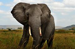 PWS_6842 (paulshaffner) Tags: dorobo safaris dorobosafaris serengeti safari studyabroad education abroad tanzania penn state pennstate biology pennstatebiology