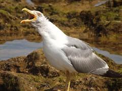 Let it go (andreia_adm) Tags: birdseverywhere birds beach wild animals hobbie letitgo