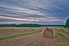 Red shirt (guysamsonphoto) Tags: guysamson sonyalpha6300 zeiss1635f4 hdr hay foin sunset coucherdesoleil warwick aurorahdrpro