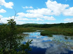 Let Them Be Left 8/17/16 (dianecordell) Tags: poetry august summer glenlake queensburyny wildness water reflections clouds mountains trees plants nature