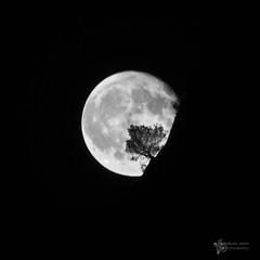 Lluna i pi ( alfanhu) Tags: sella puigcampana finestrat xarquer tafarmaig lluna moon luna night nightshot nocturn nocturna kassalla pino pinetree