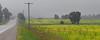 Beany weed field (virgil martin) Tags: beans field mist landscape wellingtoncounty ontario canada olympusomdem5 oloneo microsoftice gimp