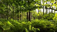Atardecer en el monte. (jumaro41) Tags: mountain monte montaa arbol tree atardecer verde senderismo bosque beauty belleza colour fascinante green landscape luz light naturaleza nature navarra ocaso puesta vida
