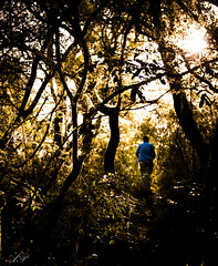 Walk (Anderson Pires.) Tags: woods bosque mata walk jungle nikon sunlight sun blue alone rs silhouettes 24120mm tree light exploring man people backlight adventure outdoor outside discovery nature moody afternoon