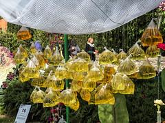 Without words (158) (Suchbild) Tags: yellow gelb ausstellung exhibition girona beutel plants pflanzen blumen flowers