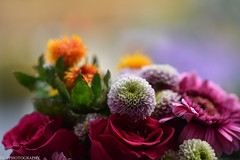 Flowers (Photography by Laurent) Tags: flowers colors macro nature nikon d810 bokeh