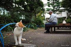 (JIMALOG) Tags: cat alleycat straycat    olympus omd em1