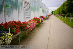 PLW_5551 (Laszlo Perger) Tags: wien vienna sterreich austria blumengarten hirschstetten flowergarden