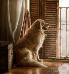 COCO (silversaltphoto) Tags: silversaltphoto senosiain studio javiersenosiain perro dog d800 nikon navarra