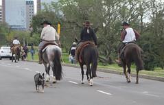 DSC_5246 (neyde zys) Tags: bandadabrigada brigadamilitar desfilefarroupilha gauchos indumentaria prendas tradicao