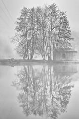 Reflets dans l'Yonne (jjcordier) Tags: auxerre yonne arbre reflet noiretblanc eau