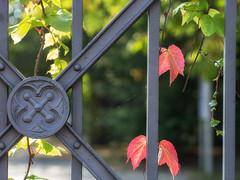 Pattern - HFF (A_Peach) Tags: pattern fence gate iron web olympusf1845mm panasoniclumixg3 hff autumn