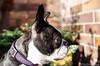 Hunde Porträt 11.10.2012