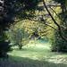 early+autumn+light