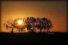 ... una altra stagione (FranK.Dip) Tags: desktop sunset wallpaper alberi tramonto nuvole nuvola sole salento puglia brindisi orizzonte sfondo sfondi passaggio spettacolare passer frankdip panoramafotogrfico