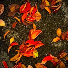 old uk autumn red england orange color colour art fall... (Photo: Мaistora on Flickr)