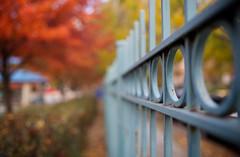 Glory (Philocycler) Tags: fall fence bokeh fallcolors chicagoist chicagofallcolors