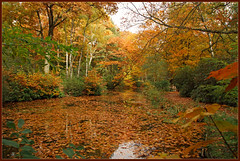 Indian Summer in Maharishi's Garden (Bert Kaufmann) Tags: autumn holland reflection fall netherlands pond ngc herbst nederland autumncolours autumncolors nl tuin paysbas herfstkleuren indiansummer harden niederlande herst vijver reflectie maharishi kloostertuin herfsttuin vlodropstation oktoberwarmte