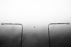 Urban Migratory Bird.. (Peter Levi) Tags: street city blackandwhite bw blancoynegro monochrome birds 35mm mono sweden stockholm streetphotography documentary lightpost x100 blackwhitephotos fujifilmx100 finepixx100 fujix100