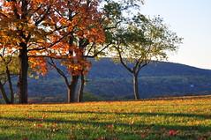 Bolivar Heights (Nicholas Delaney) Tags: autumn trees red orange color tree green fall landscape gold nationalpark nikon pretty wv westvirginia harpersferry battlefield