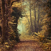Closer (Oer-Wout) Tags: autumn trees fall nature square path thesecretlifeoftrees oerwout