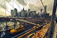Day 5: Brooklin Bridge - NYC (piddaz) Tags: new york nyc bridge yellow canon manhattan taxi united ponte 7d pont states gotham brooklin unis stati etats sigma1020mmf456exdchsm
