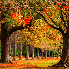Underneath the arches (Steve-h) Tags: park pink blue trees ireland red dublin orange woman seagulls color colour men green art tourism halloween nature colors girl grass birds yellow lady bronze canon eos gold grey design beige europe colours zoom pigeon gulls tourists autumnleaves telephoto handheld paths recreation railings citycentre aerlingus spotmetering ststephensgreen 317 aperturepriority steveh canonef100400mmf4556lisusm iso2500 canoneos5dmkii canoneos5dmk2 mygearandme october2012 mygearandmepremium mygearandmebronze mygearandmesilver explorelastsevendaysinteresting autumn2012