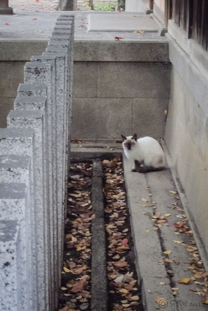 Today's Cat@2012-11-01