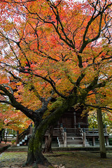 Shinnyo-ji Temple, Kyoto, Japan,   (Akiko Morita) Tags: travel autumn light holiday inspiration plant flower history love nature japan architecture garden landscape photography japanese photo kyoto image gardening vibrant joy picture jardin historic momiji serenity   romantic meditation    inspirational maples  horticulture  japon     sensation                        shinyoji