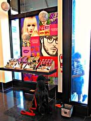 Through the Looking Glass........Explore (Midnight and me) Tags: window display makeup explore sephora standardpoodle blackstandardpoodle cosmeticsstore smilingpoodle blinkagain midnightandme dogandboyconnecting