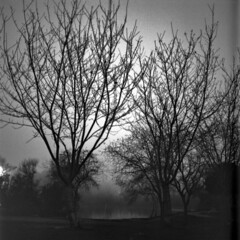 HB Central Park at Night (brian-moore) Tags: winter blackandwhite 120 analog availablelight southerncalifornia huntingtonbeach selfdeveloped fpp rpf filmphotographypodcast filmphotographyproject realphotographersforum