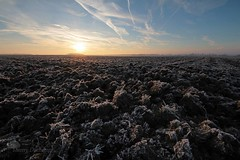 La terre nourricire (photosenvrac) Tags: sky sun ice field soleil frozen photo culture ciel land terre labour paysage plowing lanscape champ glace gele thierryduchamp